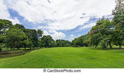 Grüner Rasen und Bäume mit blauem Himmel im öffentlichen Park