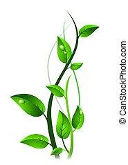 Grüner Rosenkohl mit Tropfen auf Blätter