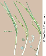 Grüner Schalottenvektor.