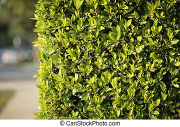 Grüner Zaun Hintergrund