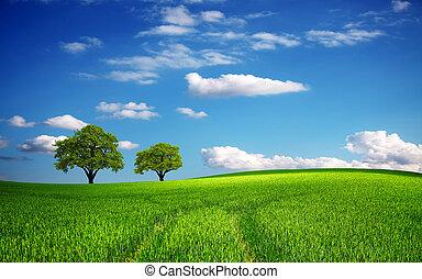 Grünes Feld im Frühling