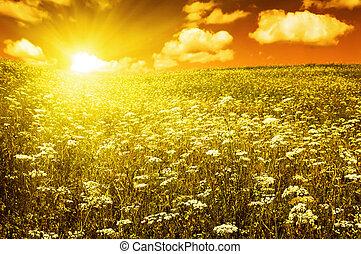 Grünes Feld mit blühenden Blumen und rotem Himmel
