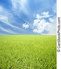 Grünes Feld und Himmel