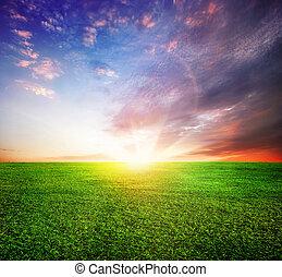 Grünes Feld und schöner Sonnenuntergang oder Sonnenaufgang