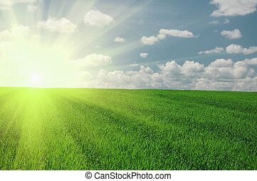 Grünes Feld und Sonnenhimmel