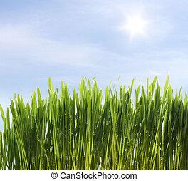 Grünes frisches Gras