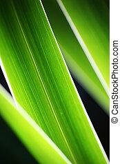 Grünes Gras, abstrakter Hintergrund