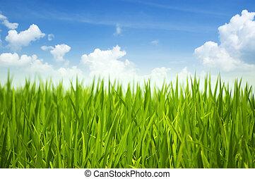 grünes gras, himmelsgewölbe