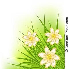 Grünes Gras mit Blumen, Frühlingshintergrund.