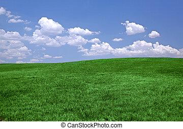 Grünes Gras und blauer Himmel.