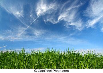 Grünes Gras unter dem Himmel mit Vlieswolken.