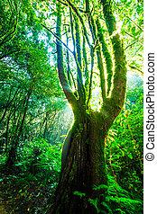 Grünes Waldlicht. Naturgroße Bäume