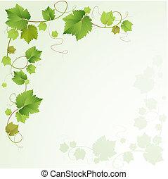 Grapes-Rebflächen