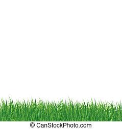 Gras auf weißem Hintergrund