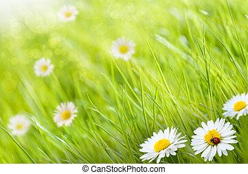 Gras Hintergrund mit Daisys Blumen und ein Ladybird, dies ist ein sonniger Tag - Bild ist verschwommen auf der linken Seite für Kopie Platz.