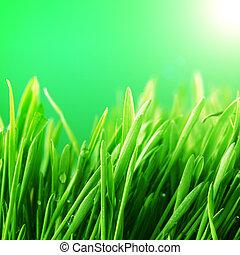 Gras-Natur-Hintergrund
