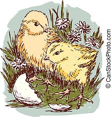 gras, neugeborenes, hühner