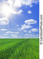Gras und blauer Himmel