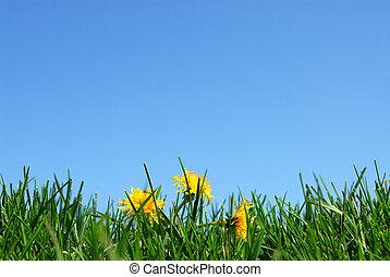 Gras und Himmel im Hintergrund
