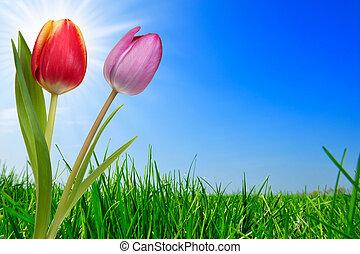Gras und schöne Tulpen