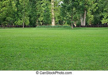 Grasfeld und Bäume