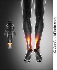 Graue Muskelanatomie - Achilles.