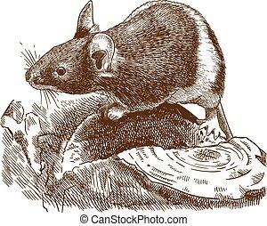 Gravierende Illustration der kleinen Maus.