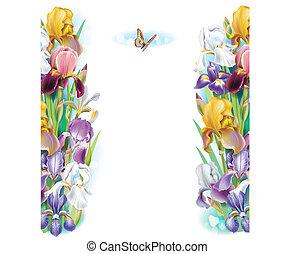 Grenze von Irisblumen.