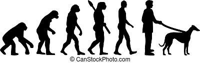 Greyhound Evolution.