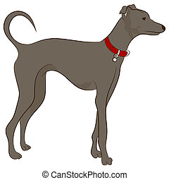 Greyhound Hund.