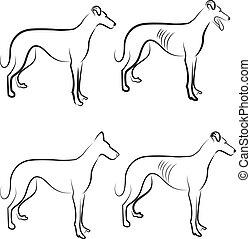 Greyhound Hunde Logo Vektor.
