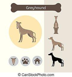 Greyhound Hunderasse infographic.