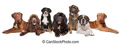 Große Gruppe großer Hunde