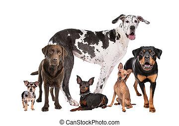 Große Gruppe von Hunden