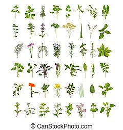 Große Kräuterblätter und Blumensammlung