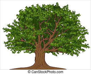Großer Baum
