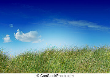 Großer grüner, blauer Himmel und eine Wolke, das Bild ist gesättigt, die Wolke ist auf der linken Seite, das Gras ist ungeschnitten