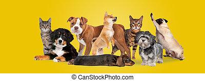 gruppe, acht, hunden, katzen
