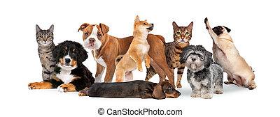 gruppe, acht, katzen, hunden