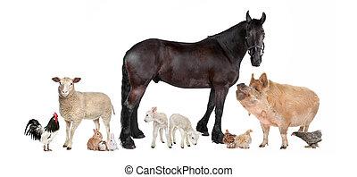Gruppe von Nutztieren
