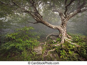 Gruseliger Märchenbaum, unheimlicher Waldnebel Nebel, aalachische NC-Fantasielandschaft in den verrückten Gärten des blauen Bergs in der Nähe von Asheville Nordcarolina