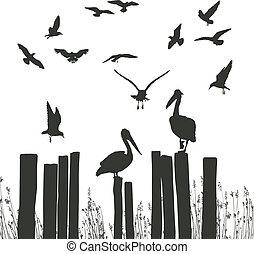 Gulls und Pelikane
