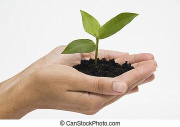 Hände halten Samen