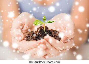 Hände mit grünem Rosenkohl und Boden