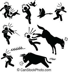 Häusliches Tier greift Menschen an.