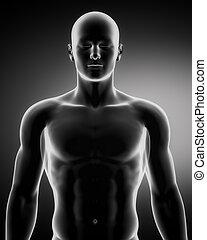 höher, figur, anatomisch, teil, position, mann