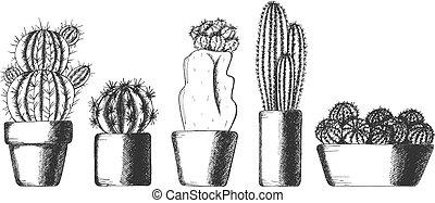 Hübsche Kaktus-Hauspflanzen in Töpfen