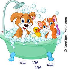 haben, katz, hund, bad