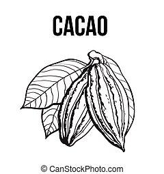 Hand gezeichnete reife Kakao-Frucht hängt an einem Ast