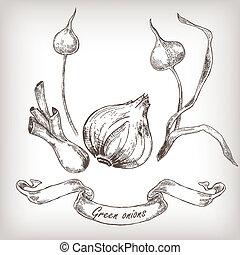 Hand gezeichnete Zwiebeln setzen Vektorgrafik.